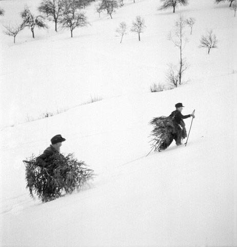 Christmas Tree picking, Germany, 1947 Archival Pigment Print